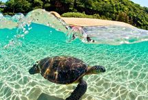 Vacation / Vacation inspiration