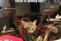 katten humor