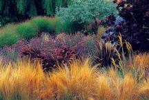 Ornamental Grasses / Graminacee - Grass - Graminées -  Gras - Gräs - Gress - Græs
