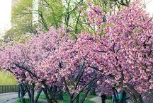 Spring of love NY / I❤️NY