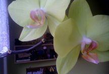 My Flowers ^_^