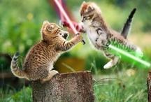 STAR WARS!!!!!!!!!!!!!! / by Ashley Ramage