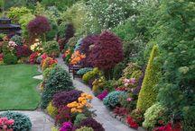zahrady snů / Kdo se rád prochází v přírodě a obdivuje květinové zahrady, tak na této nástěnce najde přímo fantazijní zahrady a parky, které by si snad přál každý.