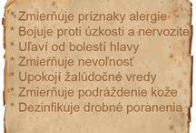 ZK.Hermanek