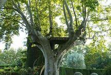 arbres particuliers