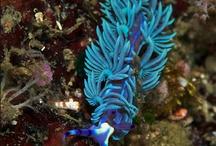 Under the Sea / by Amythst Shipman