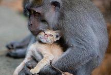 Cat&Monkey