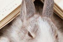 Bunny Honeys / by Pamela Polston