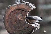 Bird Baths, Houses & Feeders