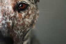 Dog Photography / Beautiful photos we simply love!