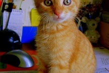 Cats / So Cute...