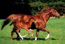 konie  źrebaki kucyk