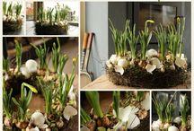pasn voorjaar