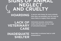 Animal Rescue / Caring for animals - we are responsible when domestic or threatened animals need help.