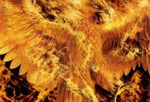 phoenix_1