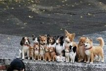 Állatokról