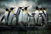 Lovely penguins
