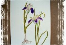 Рисование: ботаника