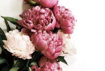 Floral mood board/inspo