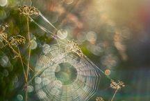 Pavučiny foto
