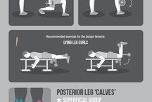 Muscle group exercises