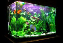 Fish  Tank Beauty