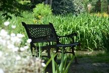 Photos en partage / Photos libres de droit, à partager ... Aidez le site http://www.comptoirdesjardins.fr/ à gagner en visibilité sur les moteurs de recherche, faites des liens vers nos pages sur vos blogs et forums de jardinage...