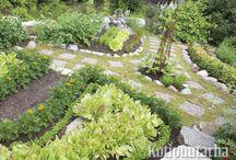 Kasvimaa ja potager / Puutarhan syötävät ihanuudet löytyvät kasvimaalta, ruukuista, potagereista ja kasvihuoneista. Katso myös taulu: Kasvihuoneet ja lavat!