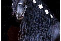 Black beauty's