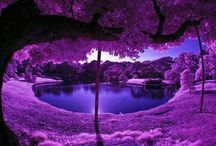 In Love with Purple / The color purple