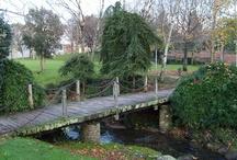 CAMBIEMOS EL GRIS POR EL VERDE / Incentivar a que más personas se unan a Fundación mi parque
