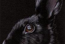 Bunny art / Bunnies by Sandrine Curtiss