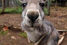 animals / Veel leuke dieren plaatjes