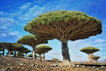 Les arbres et les forets du monde