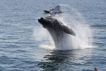 More whales! / by Visit Baja California Sur