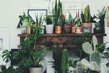 ~plants~