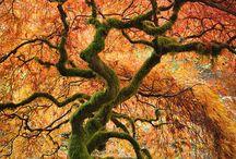 stromy a les