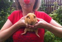 Soutěž o tablet! / Pošli fotografii s klaunským nosem a vyhraj tablet! Vítěze vybíráme každy den a to až do 5.8.2014!