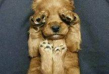 how cute...