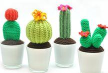 Haken cactussen