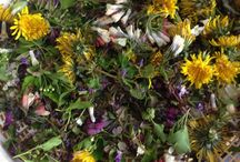 Mooie natuur en culinaire wildpluk / Er is zoveel moois te zien in de natuur maar ook zoveel eetbaars!