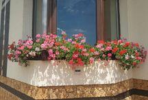garden design flowers