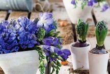 GARDEN /   ✠ my dream isto have a little garden ✠