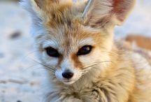 i want a fennec fox / by Tia Colasante