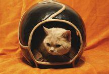 El Gato / accessories for cats