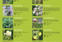 Wildbienen Infotafel / Wildbienen Infotafel#Wildbienen Kalender 2016#Wildbiene#Bienen Schutz#Bienenportrait#Mauerbiene, Hummel#Wildbienen helfen#Blühkalender# Pollengehalt, Nektargehalt,#Pollen#Nektar# Bienennahrung