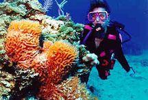 The Bahamas / Bahamas, Exuma Cays, Exuma Bahamas, Great Exuma, Atlantis, Swimming Pigs, Eleuthera, Nassau, Caribbean, Caribbean vacation