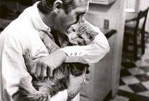 Artisti e gatti