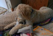 Puppy / by Dawn Hubbard