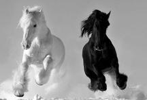 Hester - løper